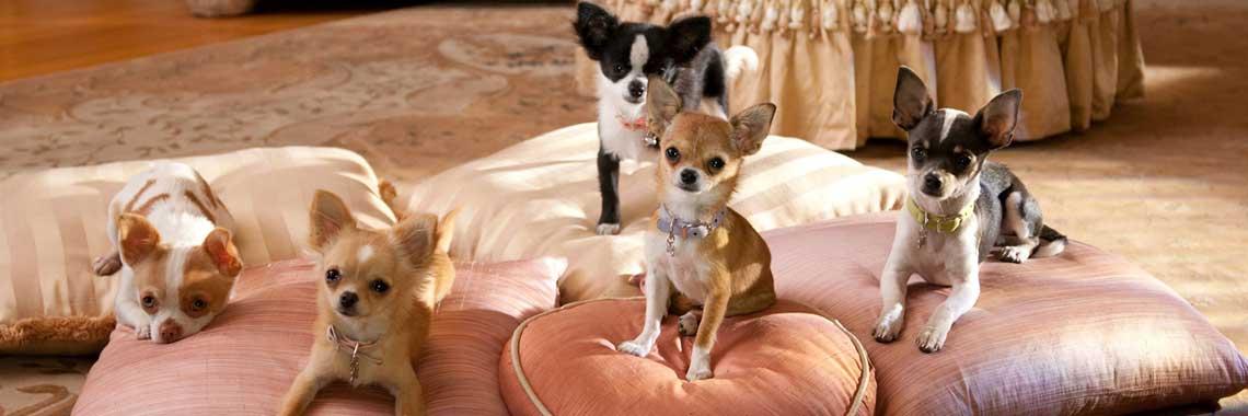 Doggylicious 4