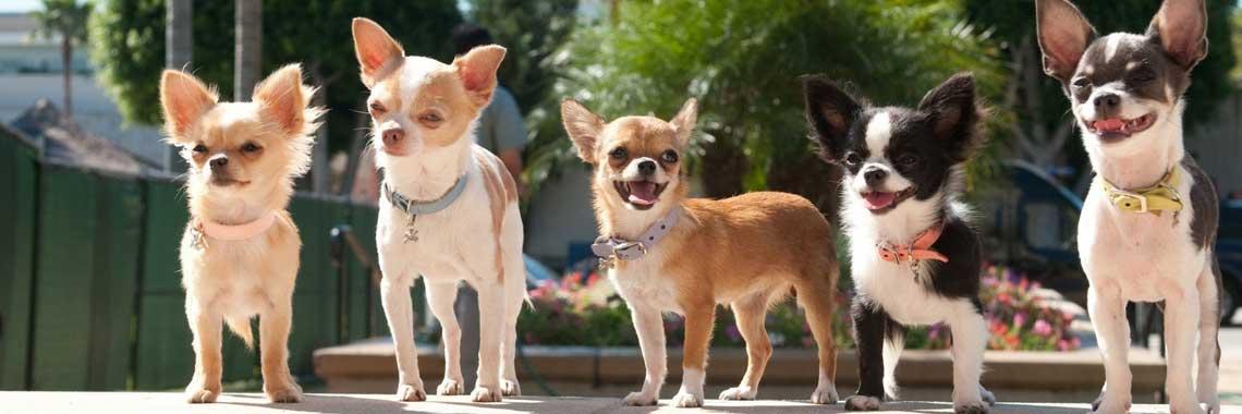 Doggylicious 5